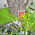 4. Fairy House in trunk of tree